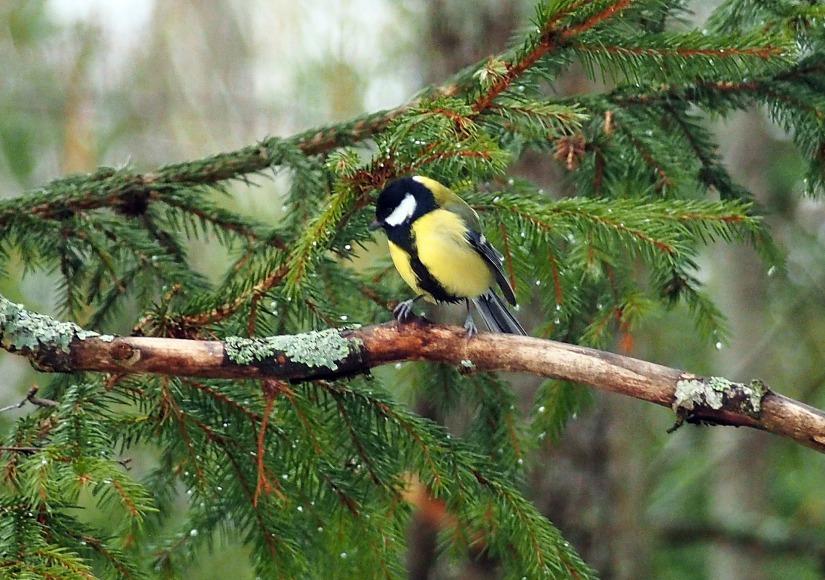 bird-2438982_1920